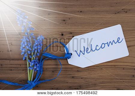 Label With English Text Welcome. Sunny Blue Spring Grape Hyacinth With Ribbon. Aged, Rustic Wodden Background. Greeting Card For Spring Season