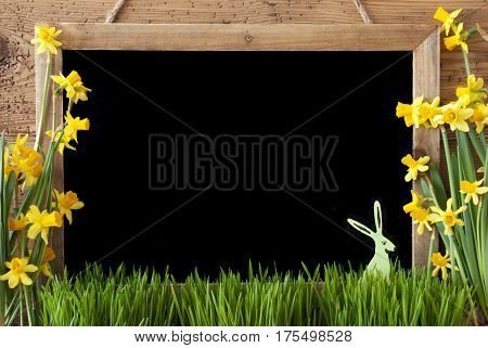 Blackboard With Copy Space For Advertisement. Spring Flowers Nacissus Or Daffodil With Grass And Bunny. Rustic Aged Wooden Background.