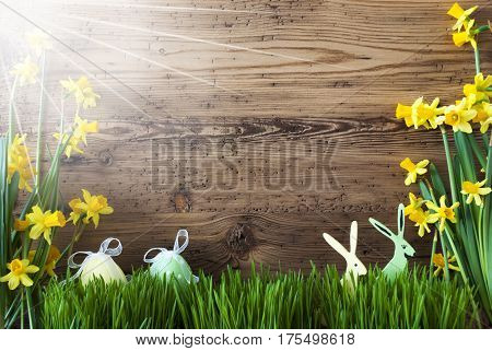 Wooden Background With Easter Eggs And Easter Bunnies. Sunny Yellow Spring Flower Narcissus With Grass. Card For Seasons Greetings.