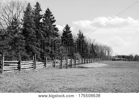 Black and white rural scene field wooden fence and tall pine trees