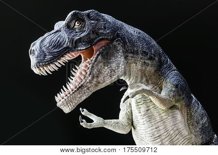 Fierce Tyrranosaurus Rex with large teeth wild eye and claws roaring against dark background dinaosaur model