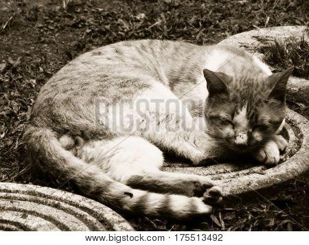 gato, cat, felino, durmiendo, animal, gatuno, criollo poster