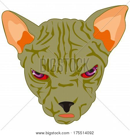 Terrible mug of the cat sphinx on white background
