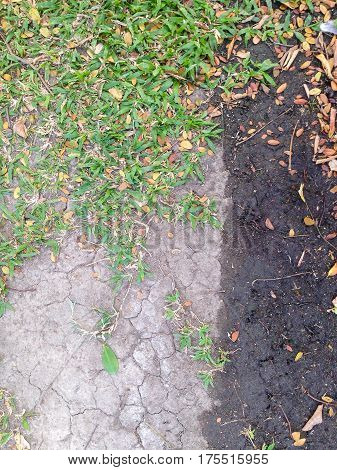 A little plant growing on dried cracked earth soil ground texture background.
