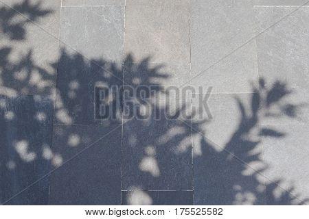 Shadow Of Tree On Gray Stone Foot Path