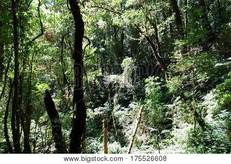 Tropical forest,The forests are abundant, Many kinds of trees in Kew Mae Pan Nature Trail, Doi Inthanon National Park, the highest point in Thailand