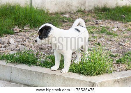 Cute little dog in the garden. Cute dog. Little dog.