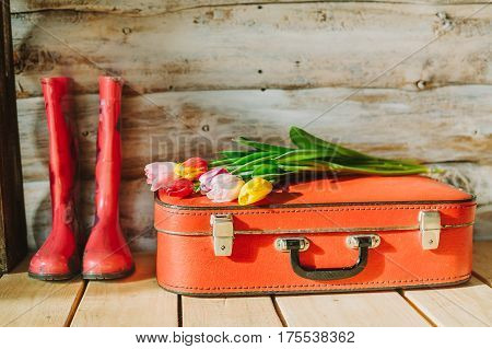 suitcase, tulips and galoshes in wooden background.
