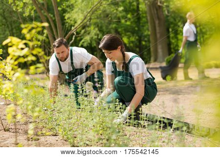 Two Gardeners Placing New Plants