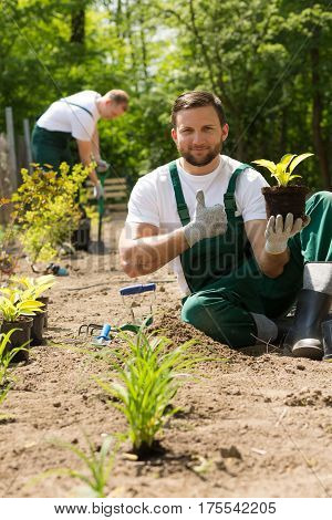 Gardener With A Plant In His Hand