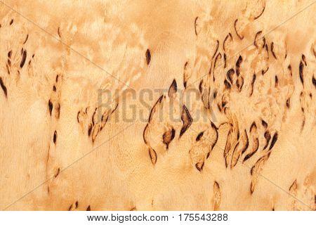 Wooden Pattern Of Karelian Birch