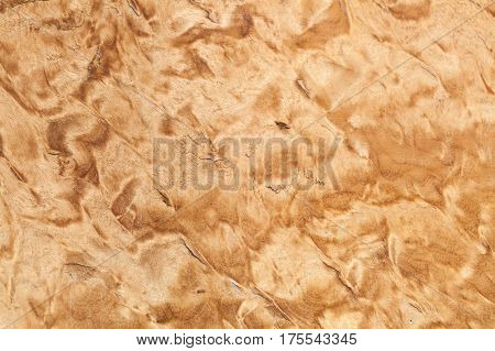 Wood Pattern, Karelian Birch Texture