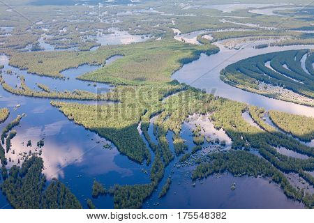 Flooded forest from above in beginning summer period.