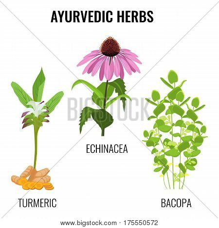 Ayurvedic herbs set isolated on white. Turmeric with rhizomes, bacopa aquatic plant, Echinacea herbaceous flower or purple coneflowers. Realistic vector illustration ayurveda herbs collection
