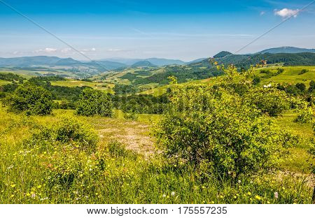 Forest On A Mountain Hillside In Rural Area