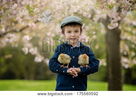 Cute Adorable Preschool Child, Boy, Playing With Little Chicks