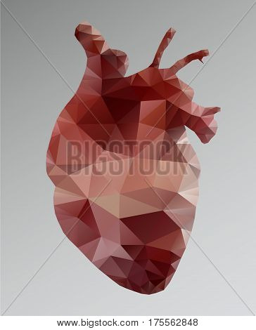 Polygonal red human heart. Abstract vector realistic anatomical organ. Polygonal mesh with the triangle.