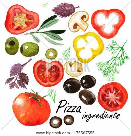 Watercolor vegetables set. Isolated drawings of the pizza ingredients: tomatoes olives spices paprica mushrooms- on the white background.