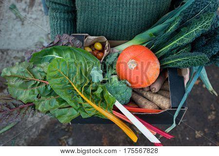 Variety Of Freshly-picked Garden Vegetables In Cardboard Box