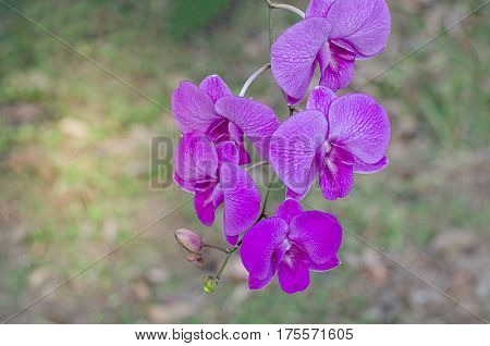 Purple Orchid Close fragility, fresh, garden  flower, fragility