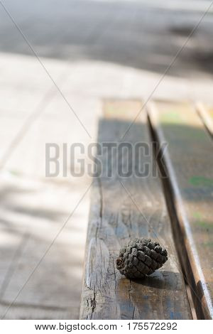 Pinecone On A Wooden Bench In The Park