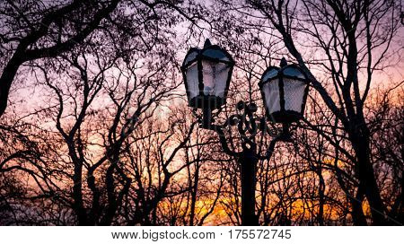 street lantern in evening park on tree brunches background