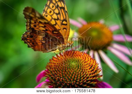 A monarch butterfly on a flower in the garden