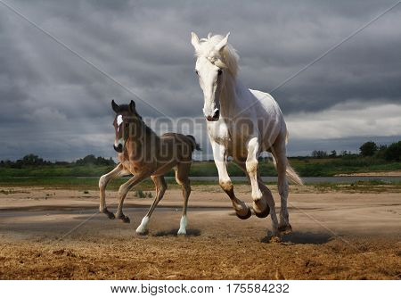 A horse and a foal jump from the rain