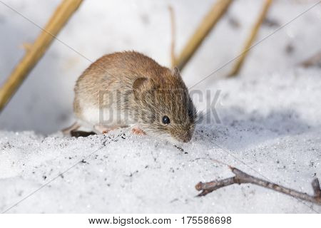 The photo shows a mouse in the snow