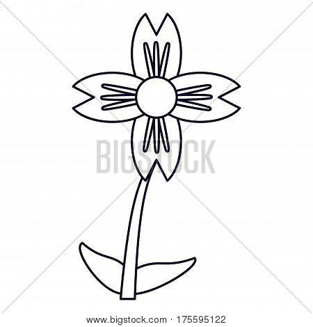 amaryllis flower natural outline vector illustration eps 10