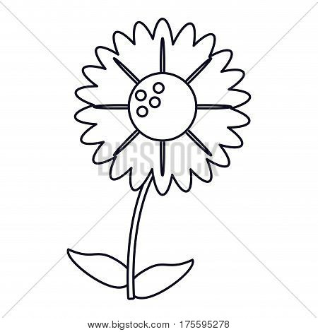 gerbera flower natural outline vector illustration eps 10