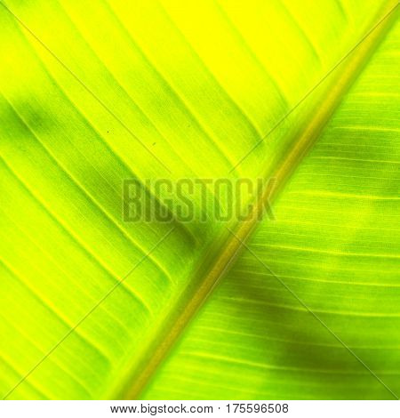 The  Leaf Close Up   Like Abstract Background