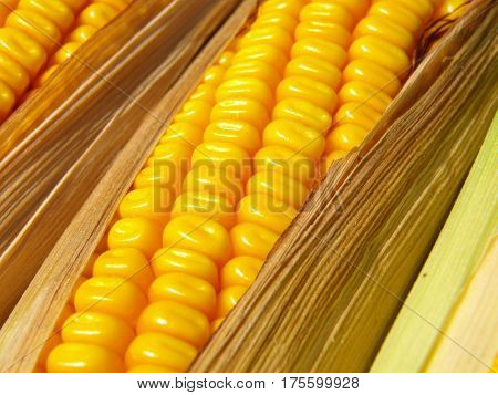 corn on the cob corn background