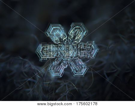 Macro photo of real snowflake: large snow crystal with six straight, broad arms and complex, dense inner pattern glowing on dark blue woolen fabric in diffused light of cloudy sky.