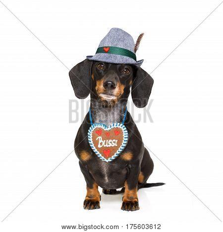 Bavarian  Dachshund Sausage Dog