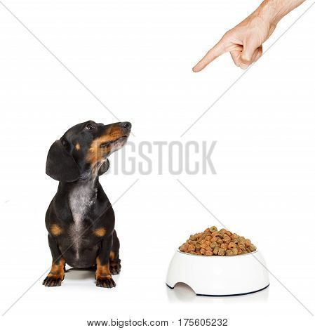 Healthy Dog With Food Bowl And Owner