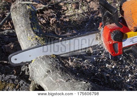 Chain saw cutting the wood. Close up.