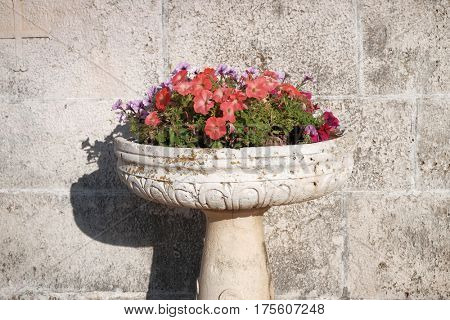 multicolored flowering of petunias in a stone crater vase, Montenegro