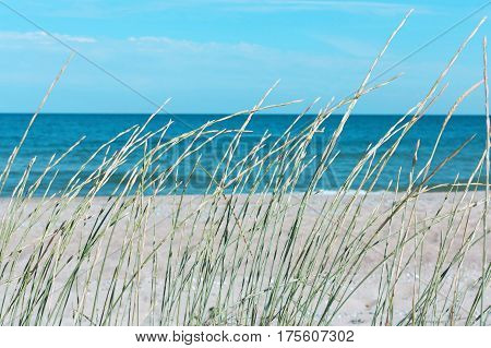 Grass on the background of the sea sand and sky beach