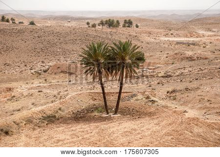 Two palms in the desert in the foreground