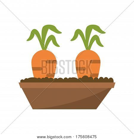 carrot garden bed carrot image vector illustration eps 10