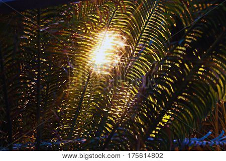 light throught the laeves of fern closeup