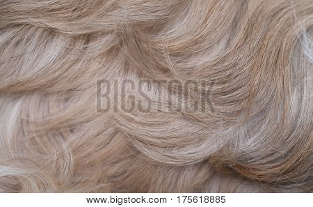 Shih tzu dog hair closeup view