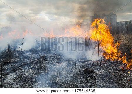 Fire in the field near the city (Kyiv Ukraine).