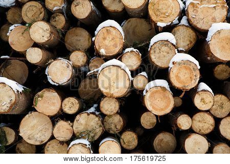 An array of felled trunks of trees prepared for export in the winter season.  Stacked in stacks of sawn forest covered with snow. Industrial logging of pine trees. Nature is used by people.