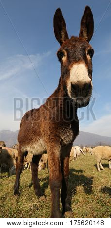 Donkey With Long Muzzle Photographed With A Fisheye Lens