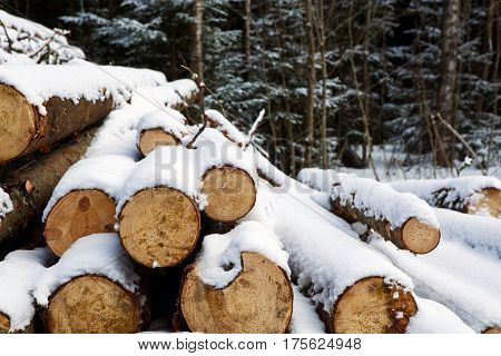 Felled trunks of trees prepared for export in the winter season. Stacked in stacks of sawn forest covered with snow. Industrial logging of pine trees. Nature is used by people.