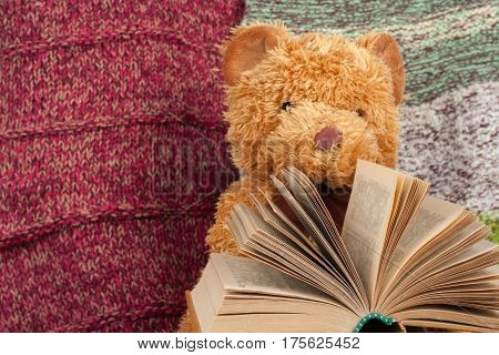 Back to school. Knitted blanket. Teddy bear reading a Open hardback book. Copy space for text