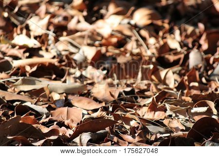 Forest Floor with soft focus background 1