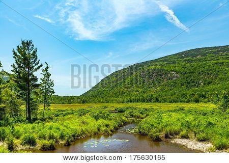 Beaver Dams On Cromwell Brook